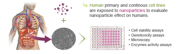 human-nanotoxicology-graphical-abstract